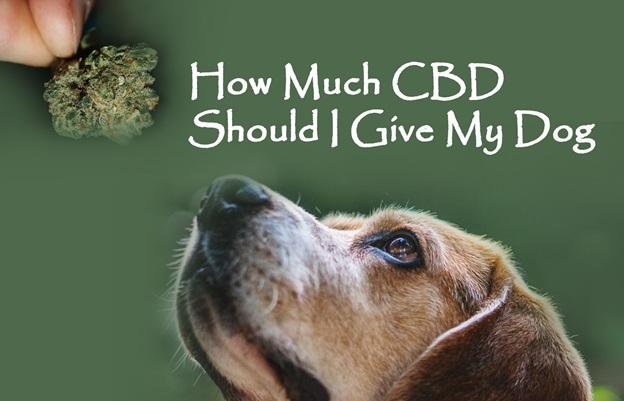 The Proper Dosage for Improved Dog Sleep